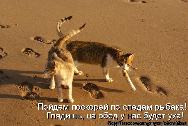 Котоматрица: Пойдем поскорей по следам рыбака! Глядишь, на обед у нас будет уха!