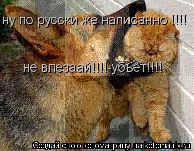 Котоматрица: ну по русски же написанно !!!! не влезаай!!!!-убьёт!!!!