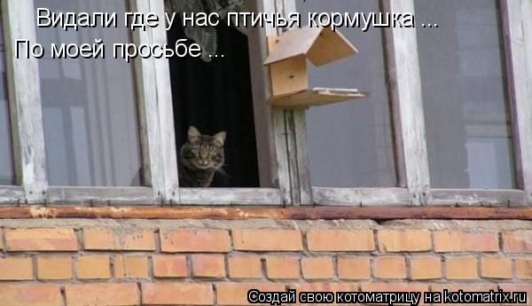 Котоматрица: Видали где у нас птичья кормушка ... По моей просьбе ...