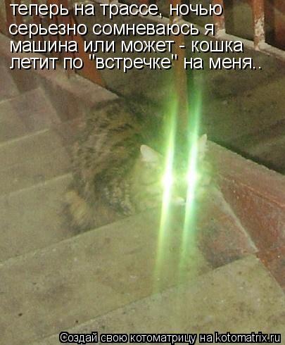 """Котоматрица: серьезно сомневаюсь я теперь на трассе, ночью машина или может - кошка летит по """"встречке"""" на меня.."""