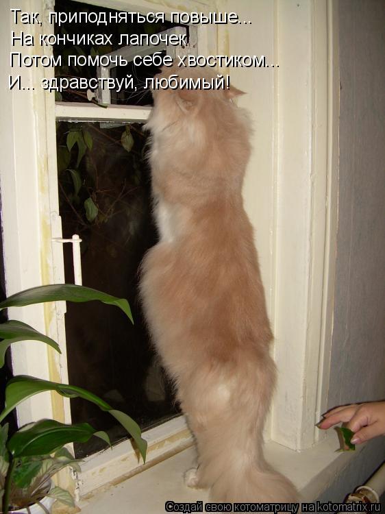 Котоматрица: Так, приподняться повыше...  На кончиках лапочек Потом помочь себе хвостиком... И... здравствуй, любимый!