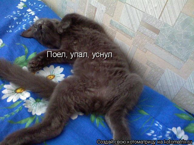 Котоматрица: Поел, упал, уснул