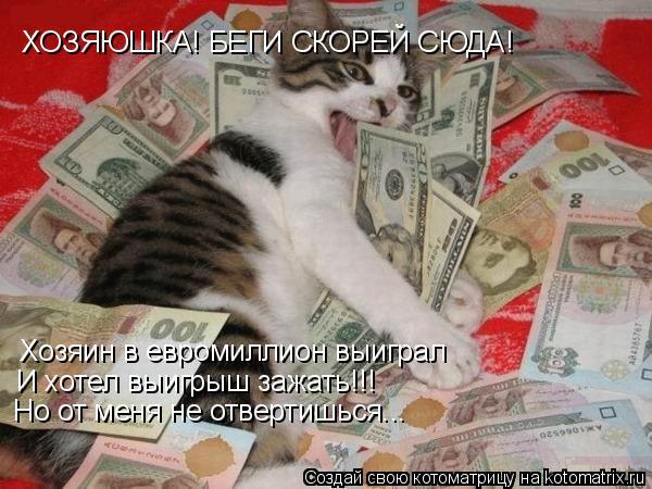 Котоматрица: ХОЗЯЮШКА! БЕГИ СКОРЕЙ СЮДА! Хозяин в евромиллион выиграл  И хотел выигрыш зажать!!! Но от меня не отвертишься...