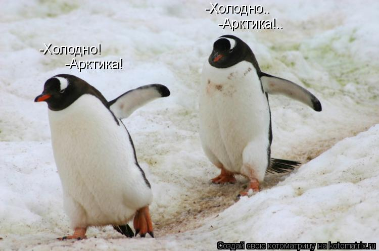 Котоматрица: -Холодно!           -Холодно..   -Арктика!  -Арктика!..