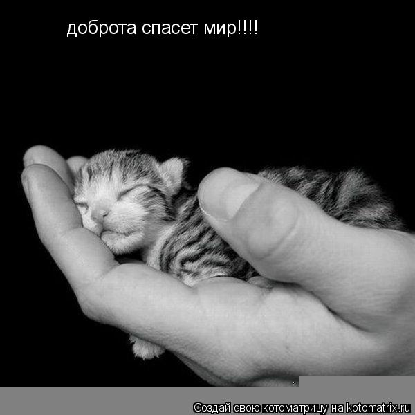 Котоматрица: доброта спасет мир!!!!