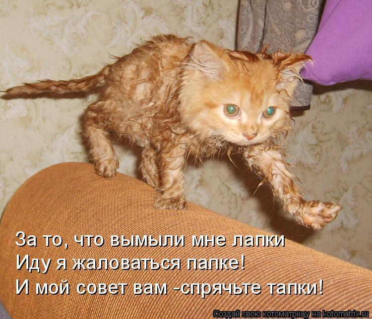 Котоматрица: За то, что вымыли мне лапки Иду я жаловаться папке! И мой совет вам -спрячьте тапки!