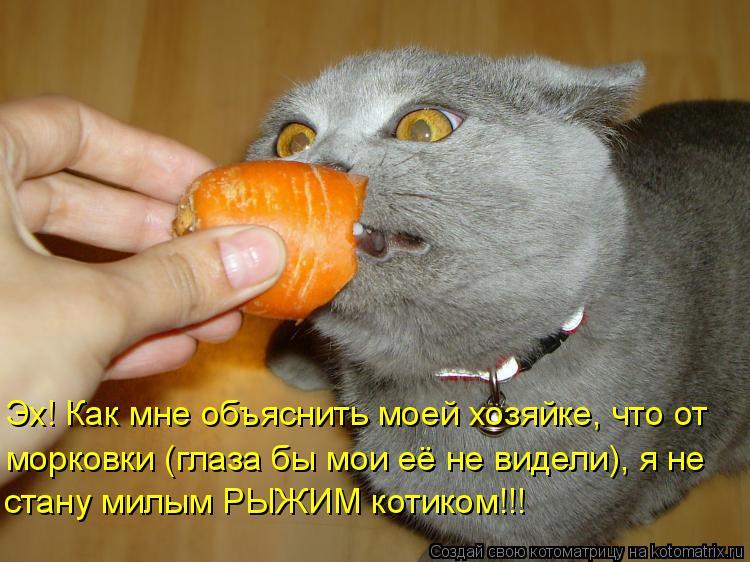 Котоматрица: Эх! Как мне объяснить моей хозяйке, что от морковки (глаза бы мои её не видели), я не  стану милым РЫЖИМ котиком!!!
