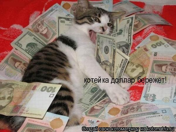 Котоматрица: котейка доллар бережёт!