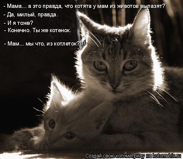 Котоматрица: - Мама... а это правда, что котята у мам из животов вылазят? - Да, милый, правда. - И я тоже? - Конечно. Ты же котенок. - Мам... мы что, из котлеток?!