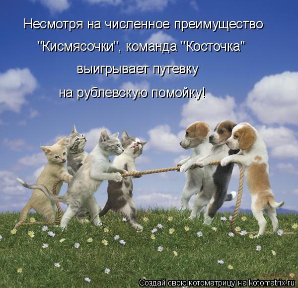 """Котоматрица: Несмотря на численное преимущество """"Кисмясочки"""", команда """"Косточка""""  выигрывает путевку на рублевскую помойку!"""