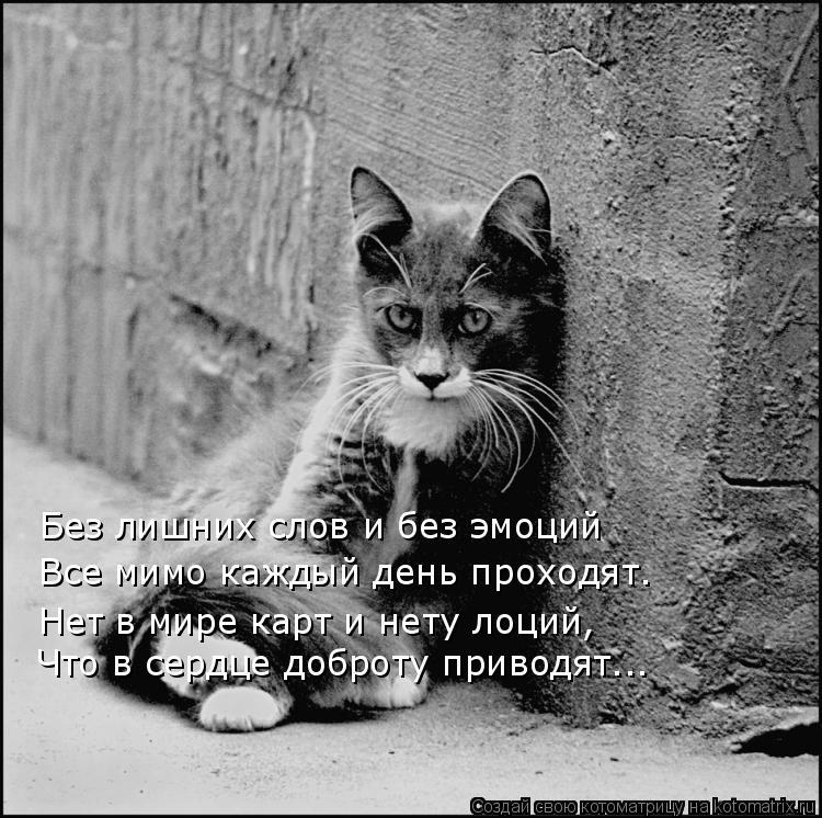 Котоматрица: Без лишних слов и без эмоций Все мимо каждый день проходят. Нет в мире карт и нету лоций, Что в сердце доброту приводят...