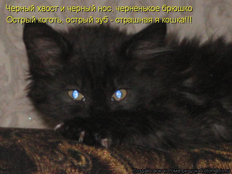 Котоматрица: Черный хвост и черный нос, черненькое брюшко Острый коготь, острый зуб - страшная я кошка!!!