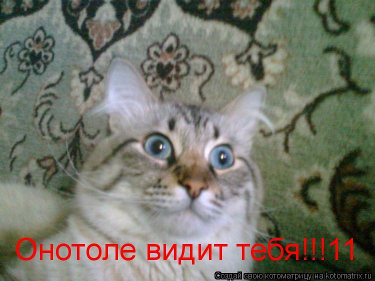 Котоматрица: Онотоле видит тебя!!!11