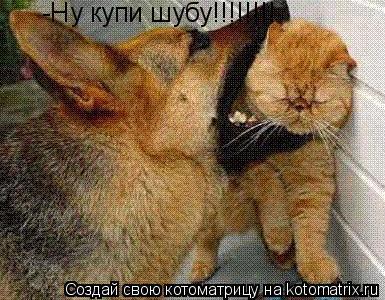 Котоматрица: -Ну купи шубу!!!!!!!!