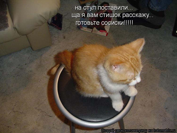 Котоматрица: на стул поставили... ща я вам стишок расскажу... готовьте сосиски!!!!!