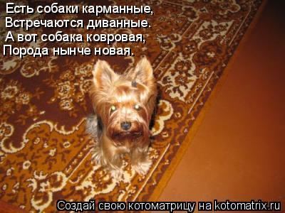 Котоматрица: Есть собаки карманные,  Встречаются диванные.  А вот собака ковровая,  Порода нынче новая.