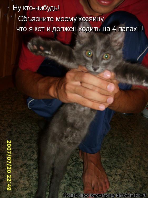 Котоматрица: Ну кто-нибудь! Объясните моему хозяину, что я кот и должен ходить на 4 лапах!!! Ну кто-нибудь!  Объясните моему хозяину,  что я кот и должен ходи