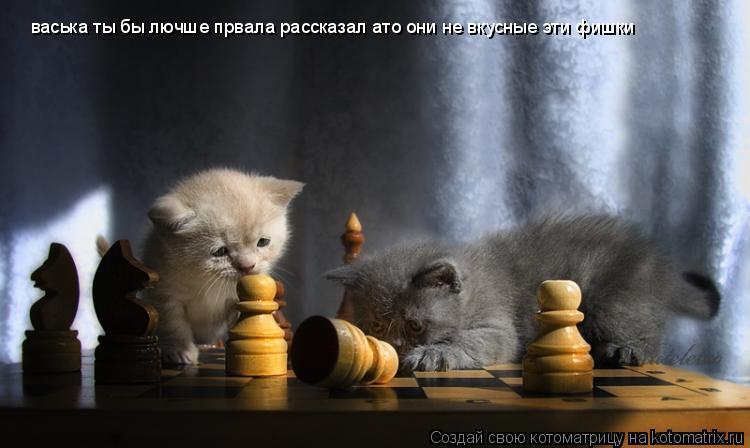 Котоматрица: васька ты бы лючше првала рассказал ато они не вкусные эти фишки