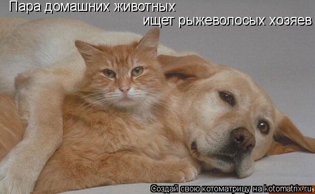 Котоматрица: ищет рыжеволосых хозяев Пара домашних животных