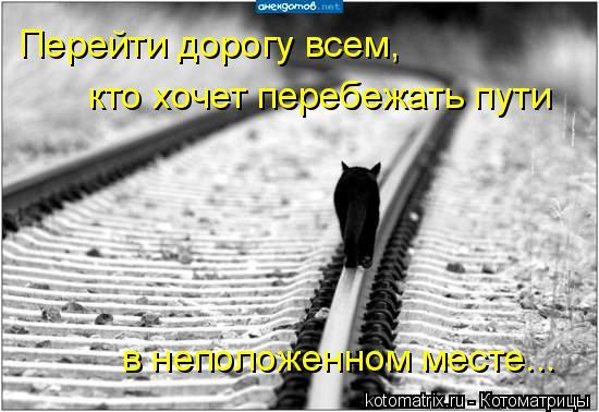 Котоматрица: Перейти дорогу всем, кто хочет перебежать пути в неположенном месте...