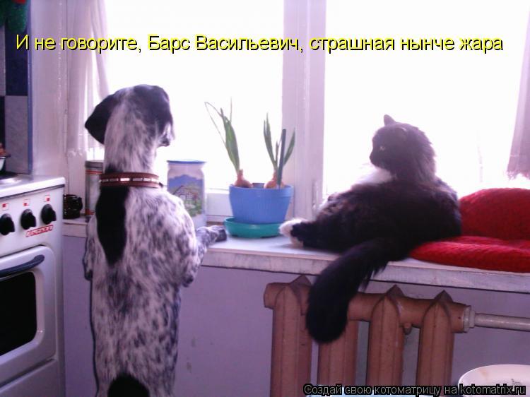 Котоматрица: И не говорите, Барс Васильевич, страшная нынче жара