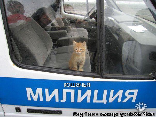 Котоматрица: кошачья