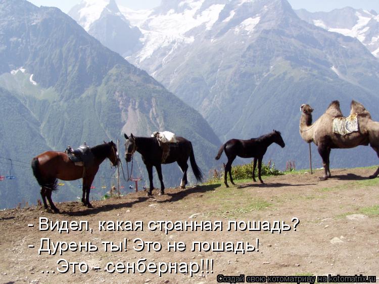 Котоматрица: - Видел, какая странная лошадь? - Дурень ты! Это не лошадь! ...Это - сенбернар!!!