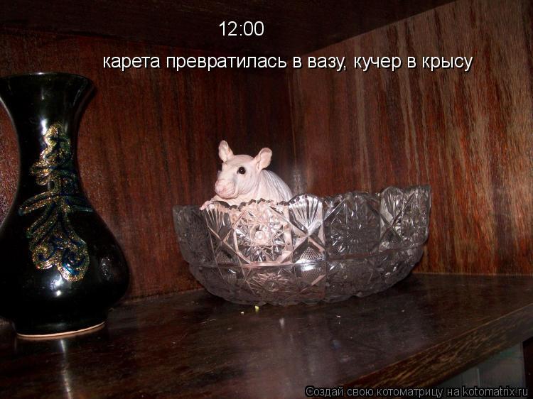 Котоматрица: карета превратилась в вазу, кучер в крысу 12:00