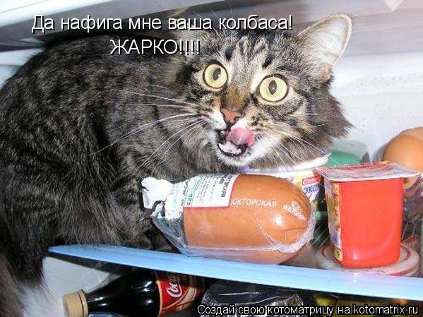 Котоматрица: Да нафига мне ваша колбаса! ЖАРКО!!!!