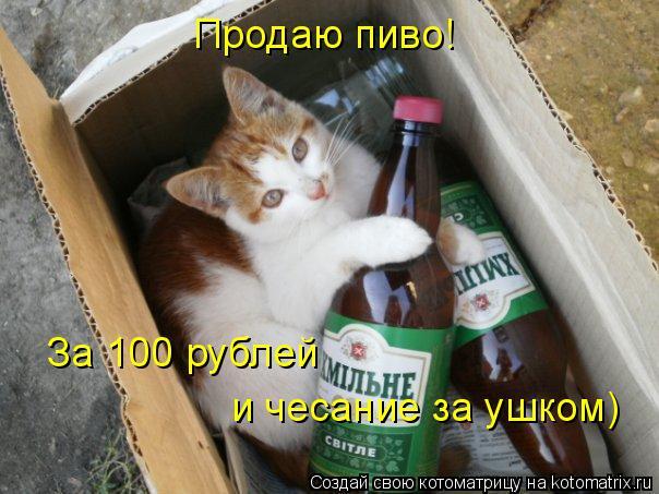 Котоматрица: Продаю пиво! За 100 рублей  и чесание за ушком)