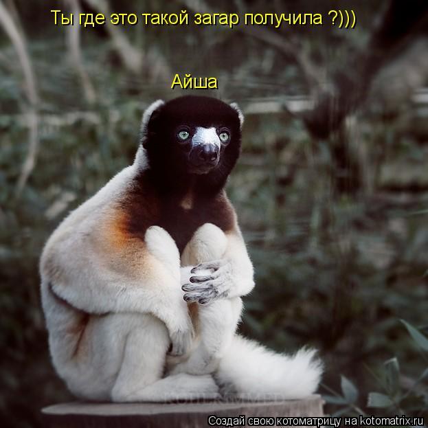 Котоматрица: Айша Ты где это такой загар получила ?)))