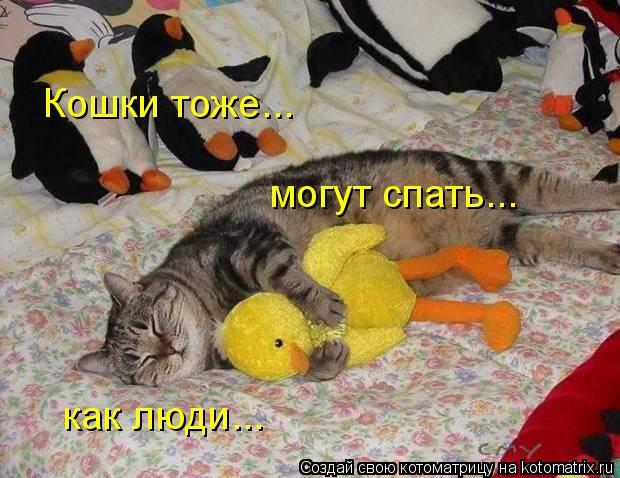 Котоматрица: Кошки тоже... могут спать... как люди...