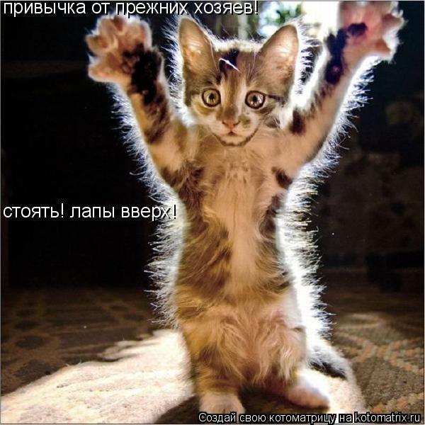 Котоматрица: привычка от прежних хозяев! стоять! лапы вверх!