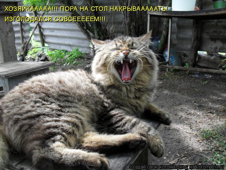 Котоматрица: ХОЗЯЙКААААА!!! ПОРА НА СТОЛ НАКРЫВАААААТЬ! ИЗГОЛОДАЛСЯ СОВСЕЕЕЕЕМ!!!