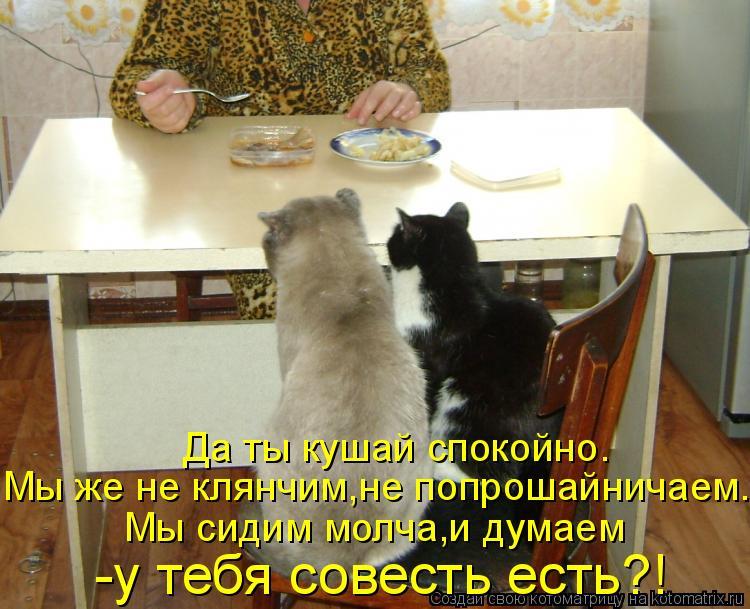 Котоматрица: Да ты кушай спокойно. Мы же не клянчим,не попрошайничаем. Мы сидим молча,и думаем -у тебя совесть есть?!