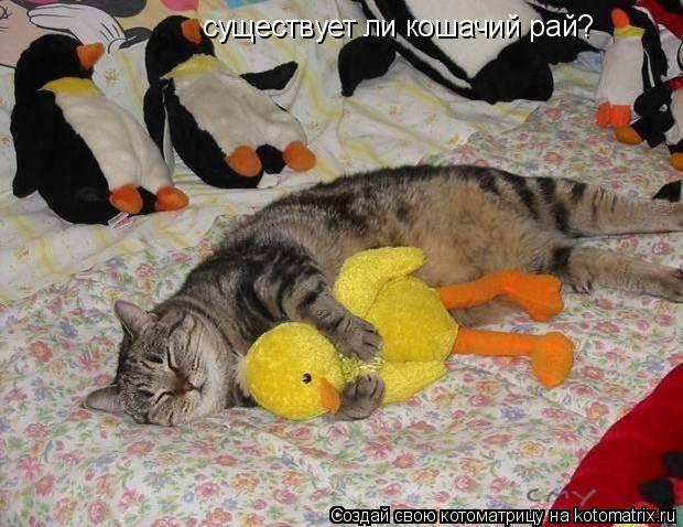 Котоматрица: существует ли кошачий рай?