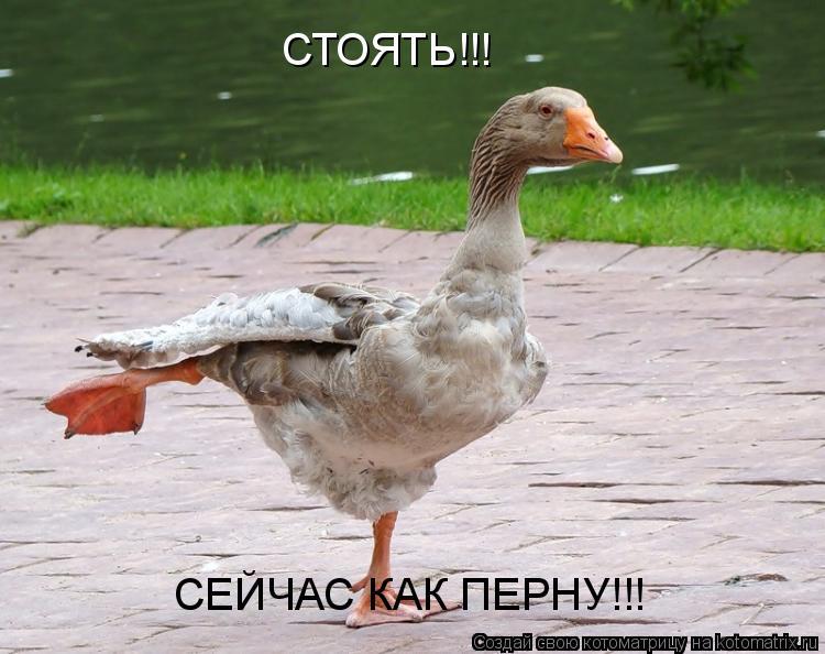 Котоматрица: СТОЯТЬ!!! СЕЙЧАС КАК ПЕРНУ!!!