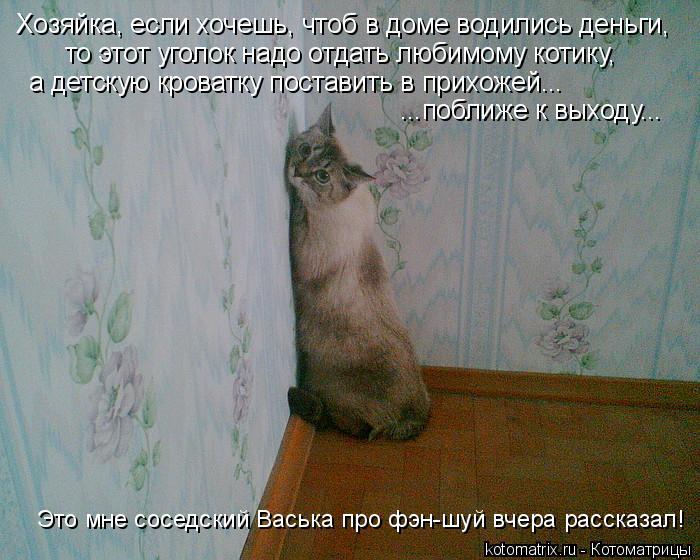 Котоматрица: Хозяйка, если хочешь, чтоб в доме водились деньги, то этот уголок надо отдать любимому котику,  а детскую кроватку поставить в прихожей... ...п