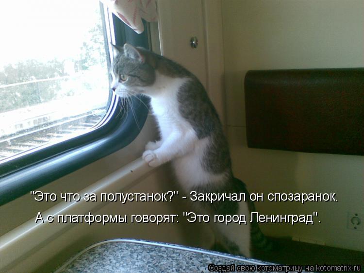 """Котоматрица: """"Это что за полустанок?"""" - Закричал он спозаранок. А с платформы говорят: """"Это город Ленинград""""."""