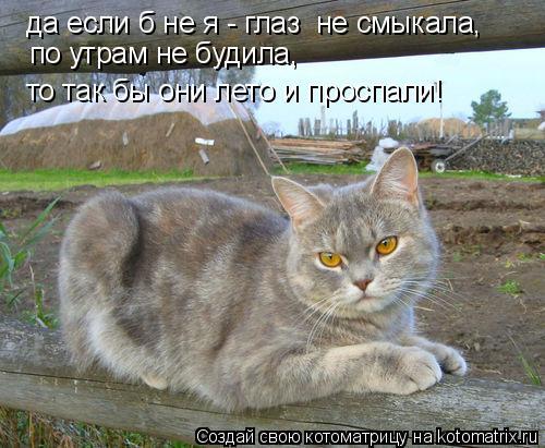 Котоматрица: да если б не я - глаз  не смыкала,  по утрам не будила,  то так бы они лето и проспали!