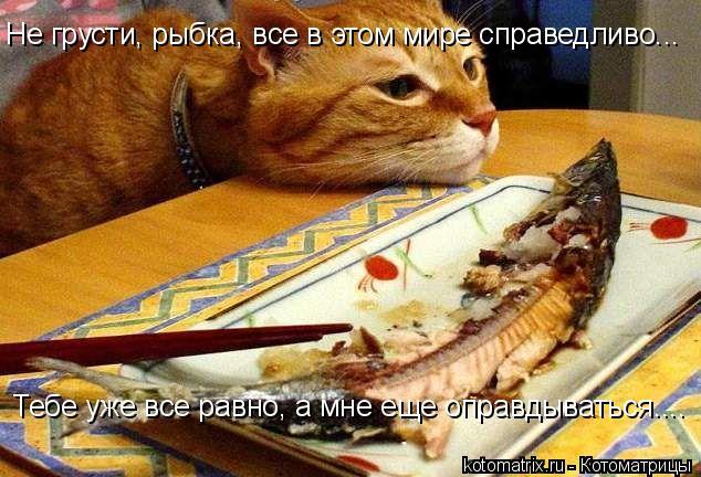 Не грусти, рыбка, все в этом мире справедливо... Тебе уже все равно, а