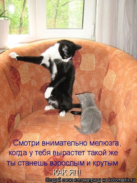 Котоматрица: Смотри внимательно мелюзга когда у тебя вырастет такой же ты станешь взрослым и крутым КАК Я!!! ,