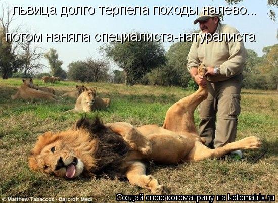 Котоматрица: львица долго терпела походы налево... потом наняла специалиста-натуралиста