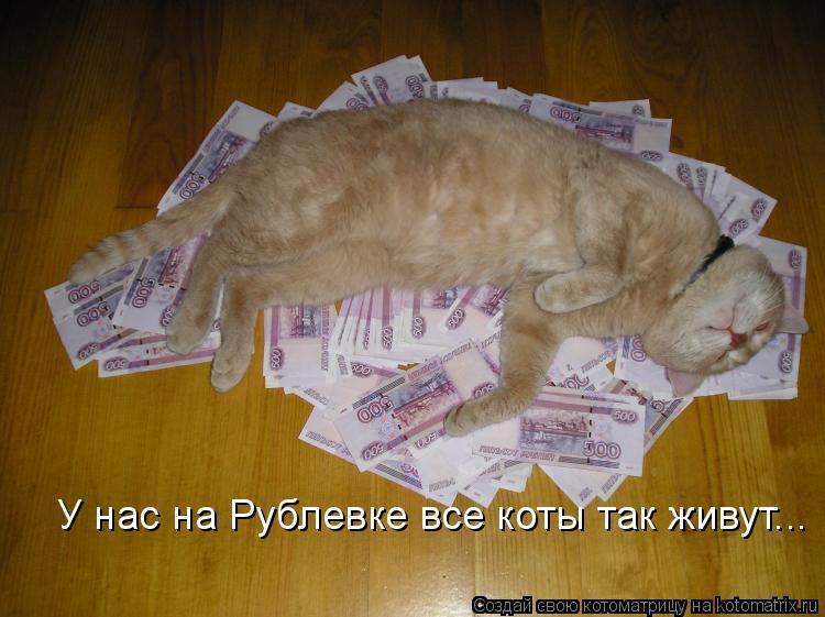 У нас на Рублевке все коты так живут...