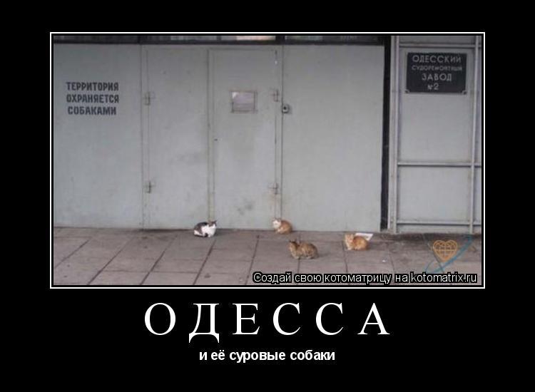 Котоматрица: Одесса и её суровые собаки