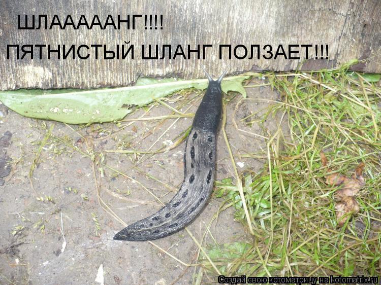Котоматрица: ШЛАААААНГ!!!! ПЯТНИСТЫЙ ШЛАНГ ПОЛЗАЕТ!!!