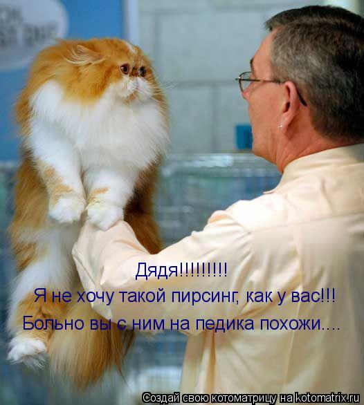 Котоматрица: Дядя!!!!!!!!! Я не хочу такой пирсинг, как у вас!!! Больно вы с ним на педика похожи....