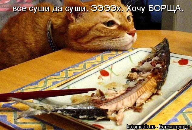 Котоматрица: все суши да суши. ЭЭЭЭх. Хочу БОРЩА.
