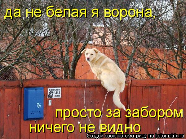 Котоматрица: да не белая я ворона, просто за забором ничего не видно