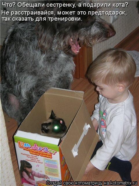 Котоматрица: Что? Обещали сестренку, а подарили кота? так сказать для тренировки. Не расстраивайся, может это предподарок,
